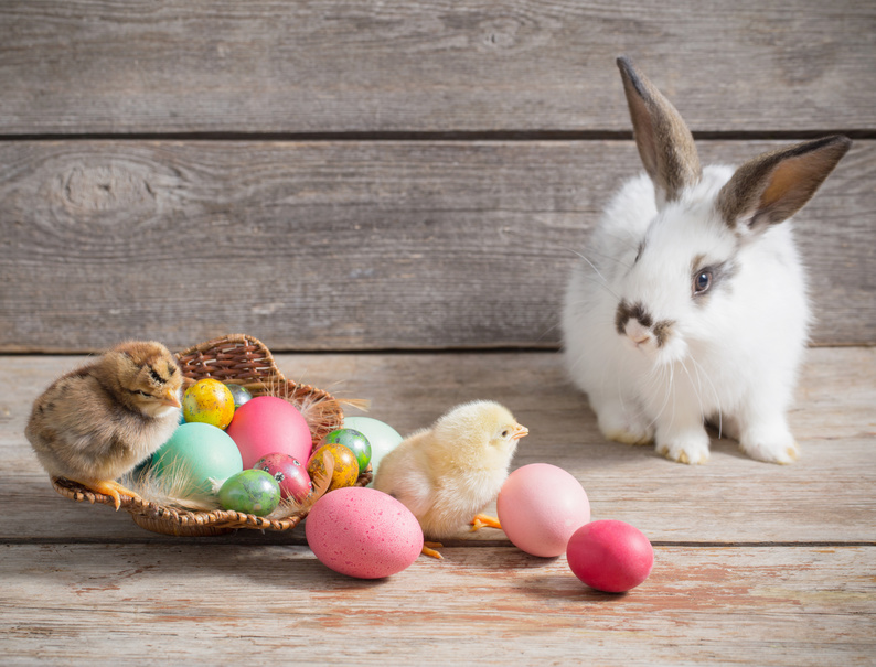 Hasen legen keine Eier